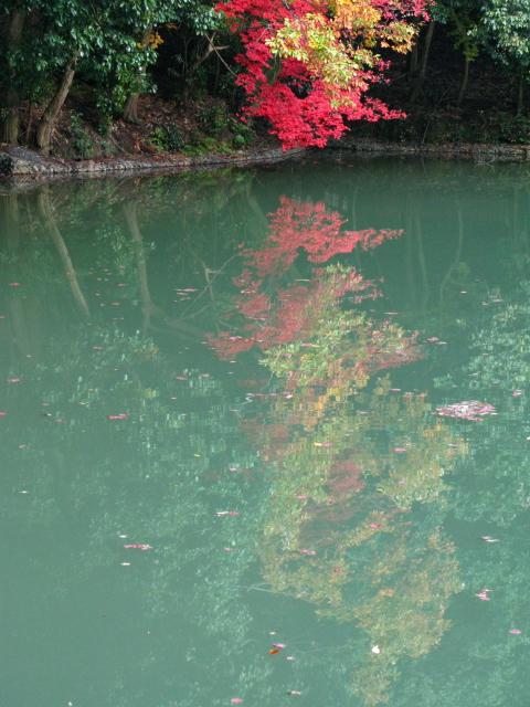 ここが紅葉の穴場中の穴場