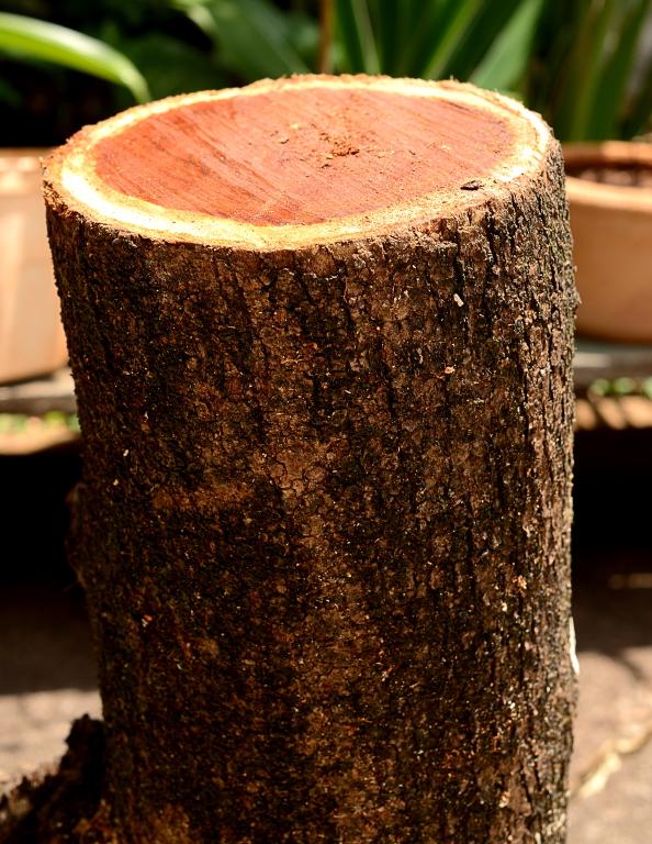 Ajuda pra identificar madeira Item